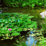 Rohsler's Provides Microhabitats for Butterflies