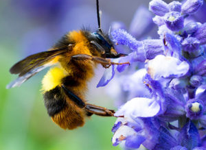 Pollinators & Perennials: A Perfect Pairing