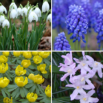 Gardening Projects for Late Fall