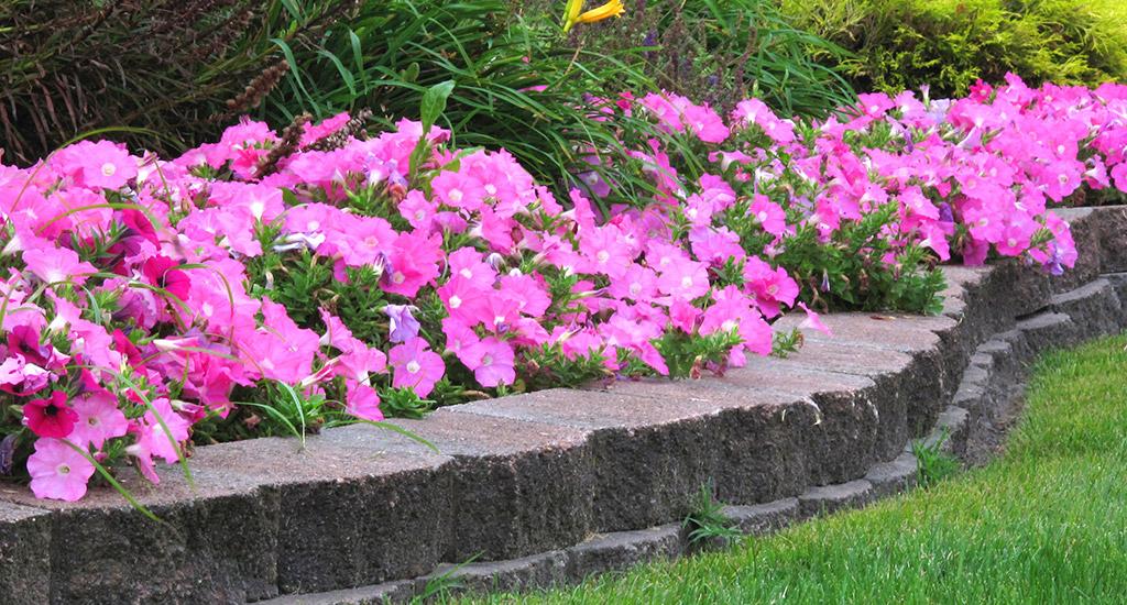 Annual-Garden