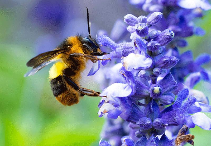 Bee Attracting Gardens