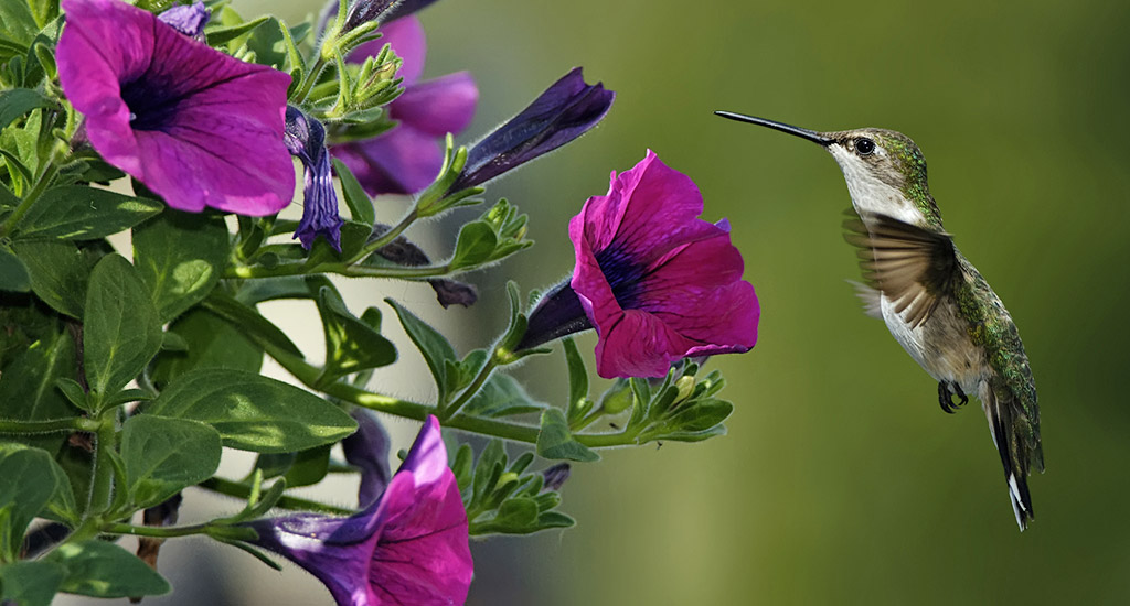 Exceptional Hummingbird Garden