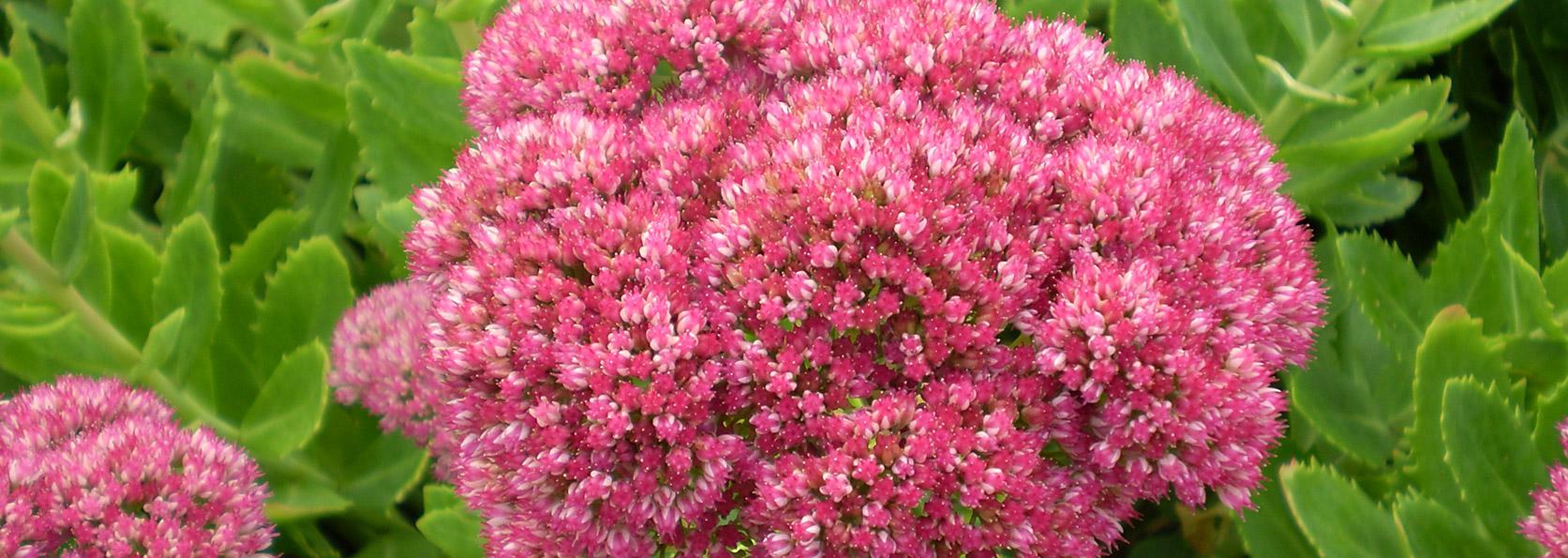 Im Your Gardens Bff Rohslers Allendale Nursery Garden Center