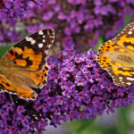 A Buffet for Pollinators