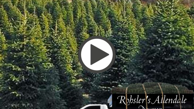 From Our NJ Tree Farm to your Home