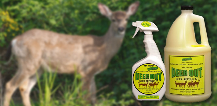 DeerOut