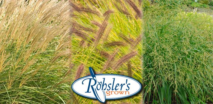 Grasses-RG