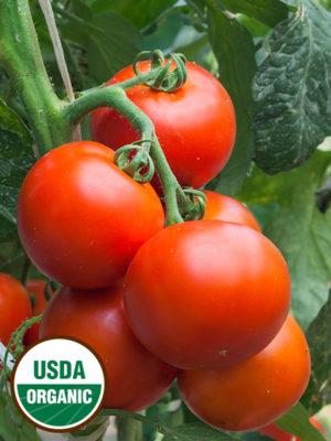 Tomato-ORGANIC
