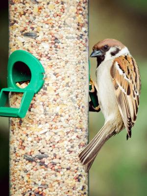 bird-at-feeder